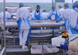 injuries in food processing plants